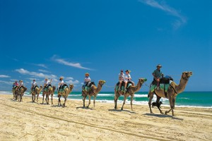 Camel Riding on Forty Mile Beach